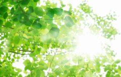 低炭素社会を実現するために太陽光エネルギーを有効活用しよう!